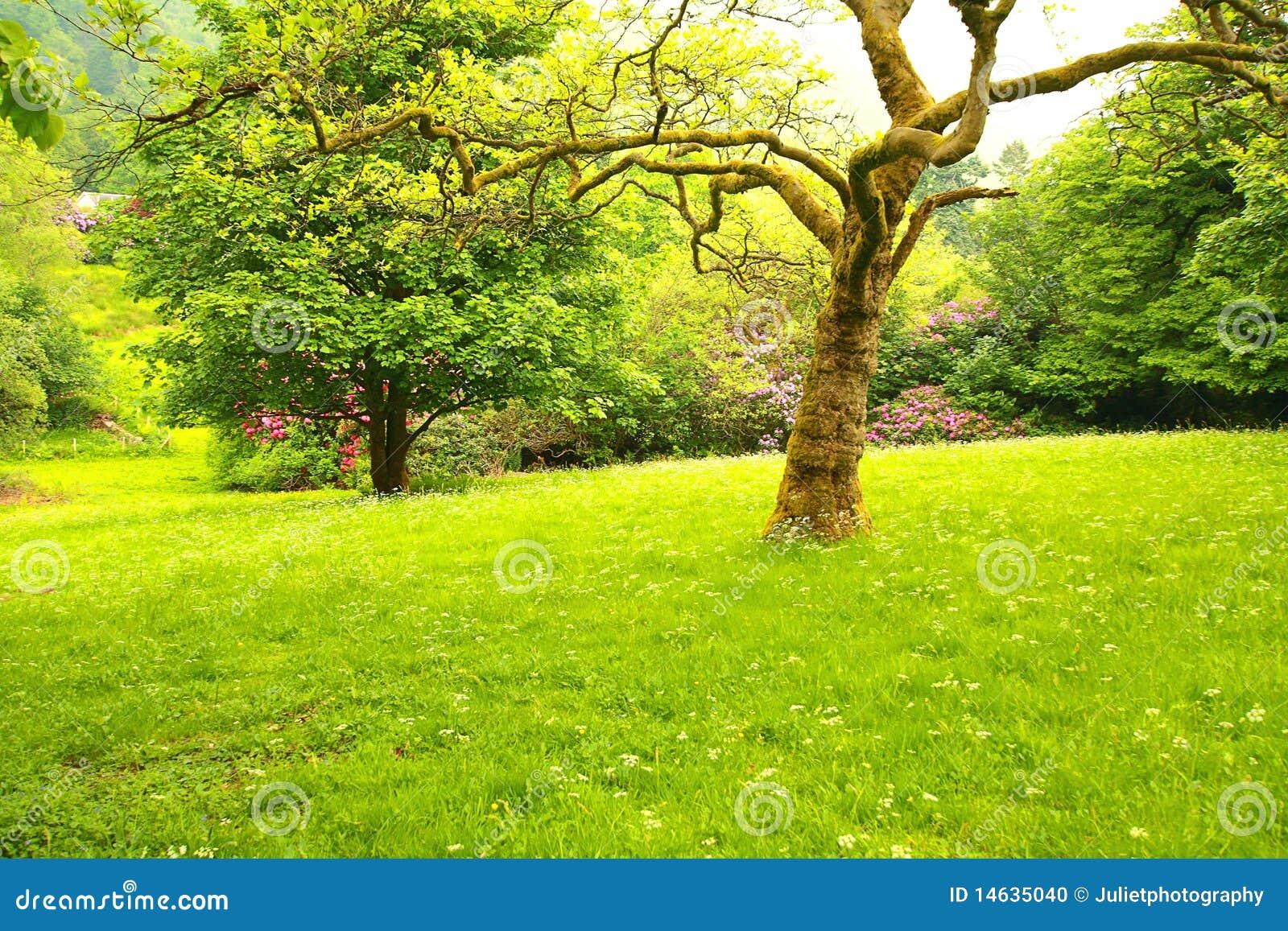 Wonderful spring garden 2 stock photo image 14635040 for Garden trees scotland