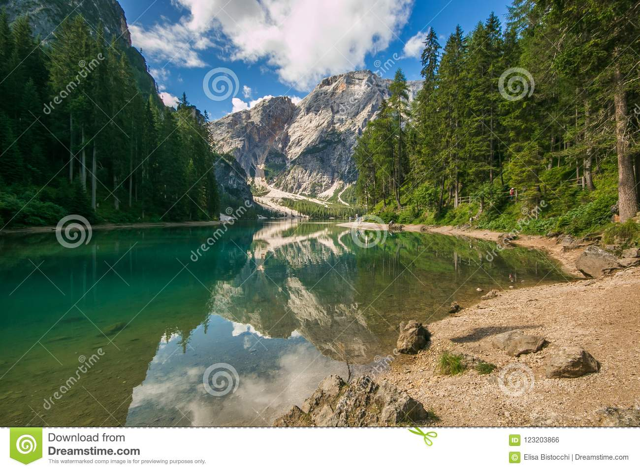Wonderful summer scenery on Braies Lake Lago di Braies and larch trees with reflection in the water. Fanes-Sennes-Prags Fanes-S