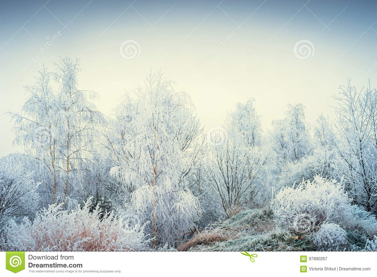 Wonderful winter landscape with snowy trees and grasses at sky background