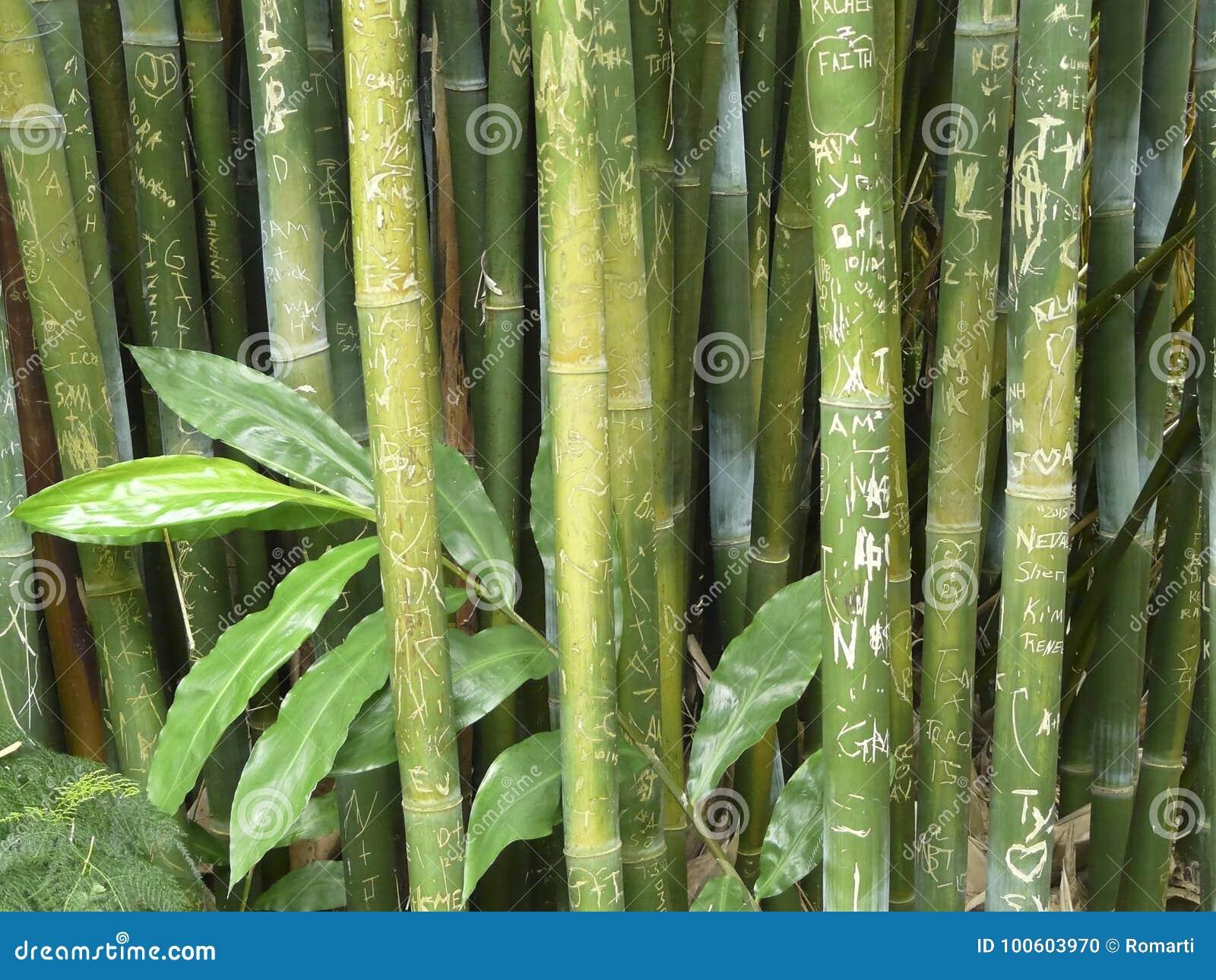 Wong Chuk Royal Bamboo Graffiti