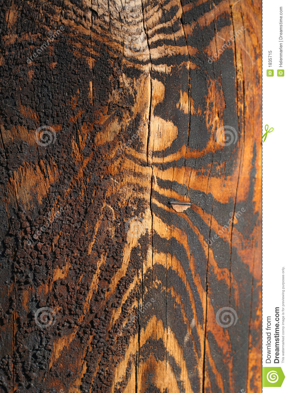 Wood acquired tiger coloring as it aged