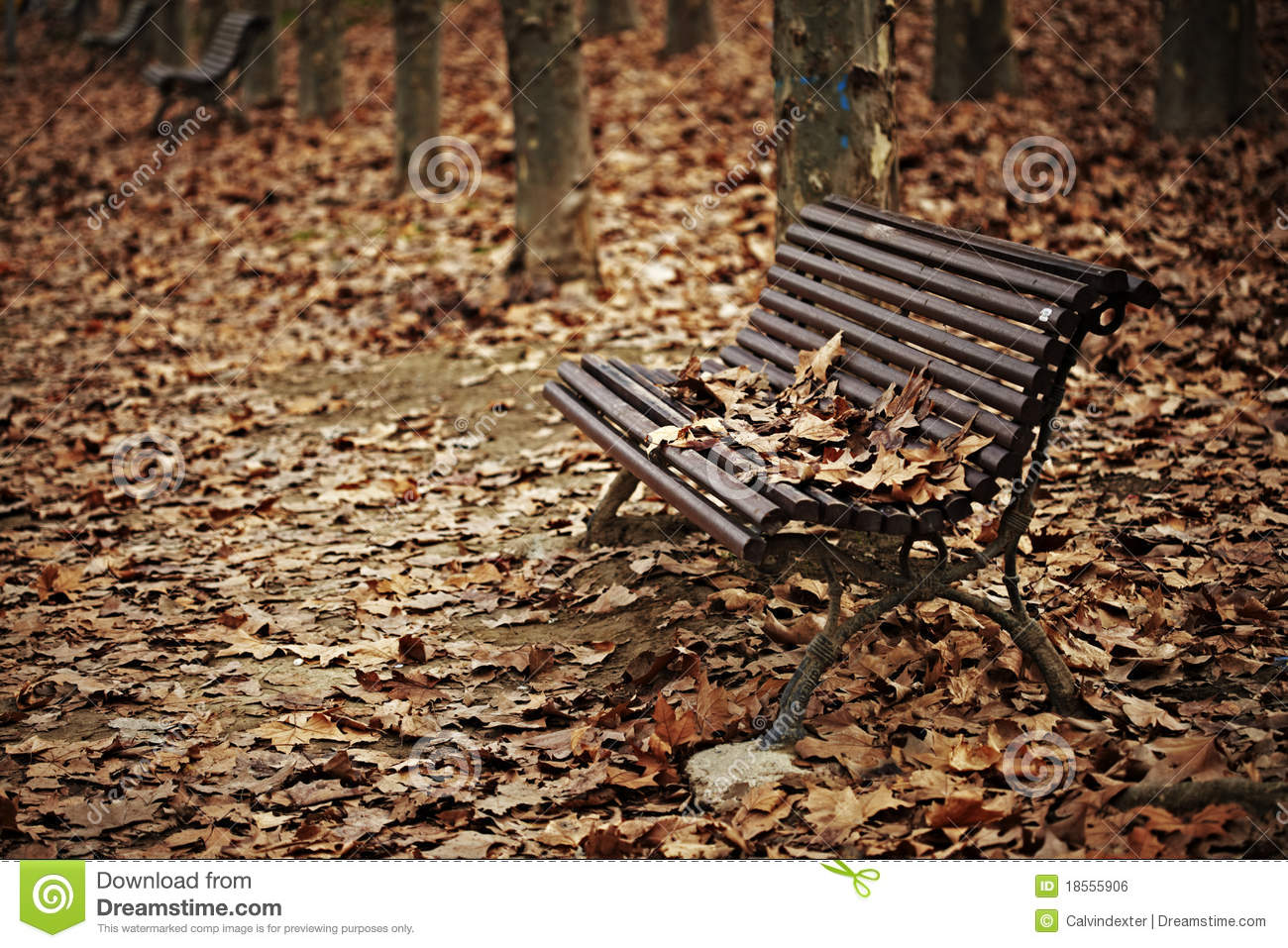 autumn leaves on bench - photo #25