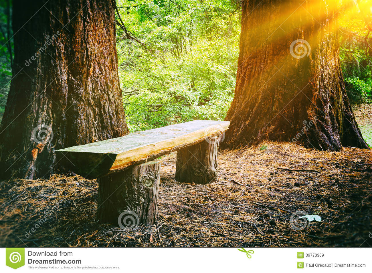Wood Bench In The Summer Forest Stock Photo Image 39773369