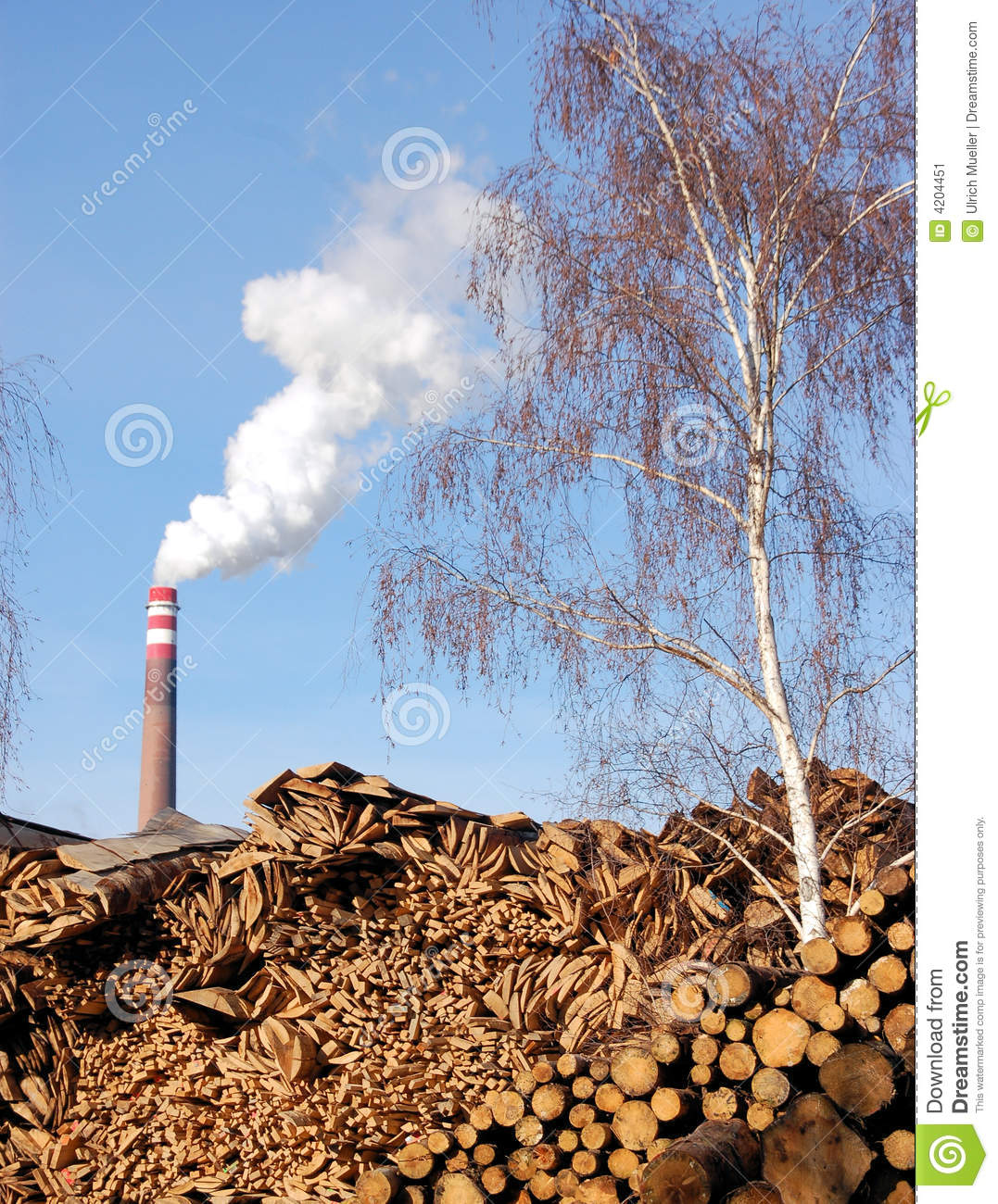 Wood and biomass plant