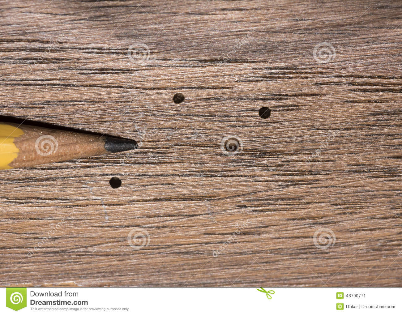 Wood Boring Beetle Damage Stock Photo Image 48790771