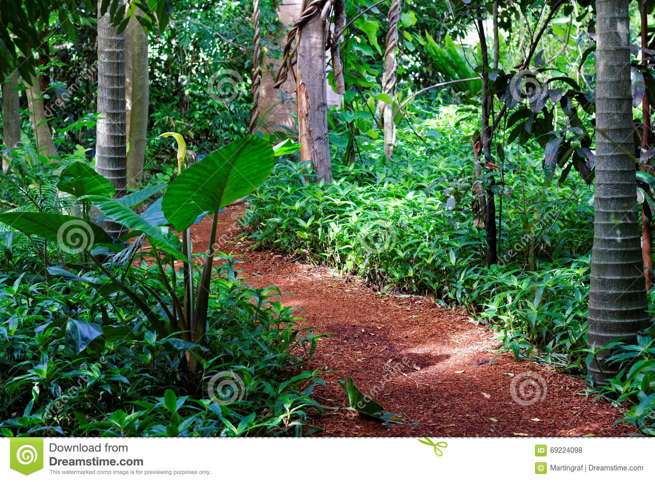 Download Wood-chipped Path Through Tropical Rain Forest Stock Photo - Image of climate, conservation: 69224098