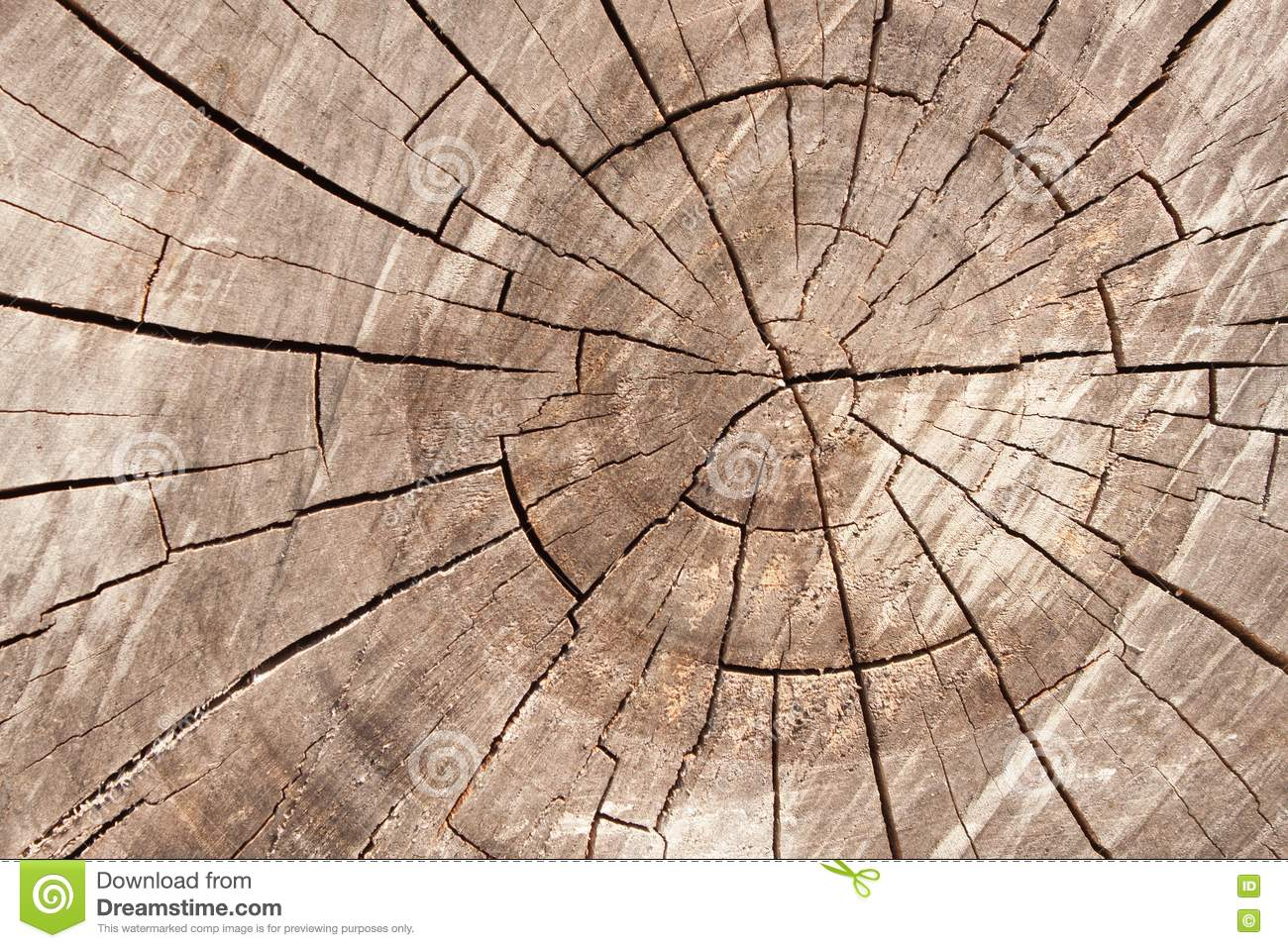 sideview background wooden wood tree cut texture log rings