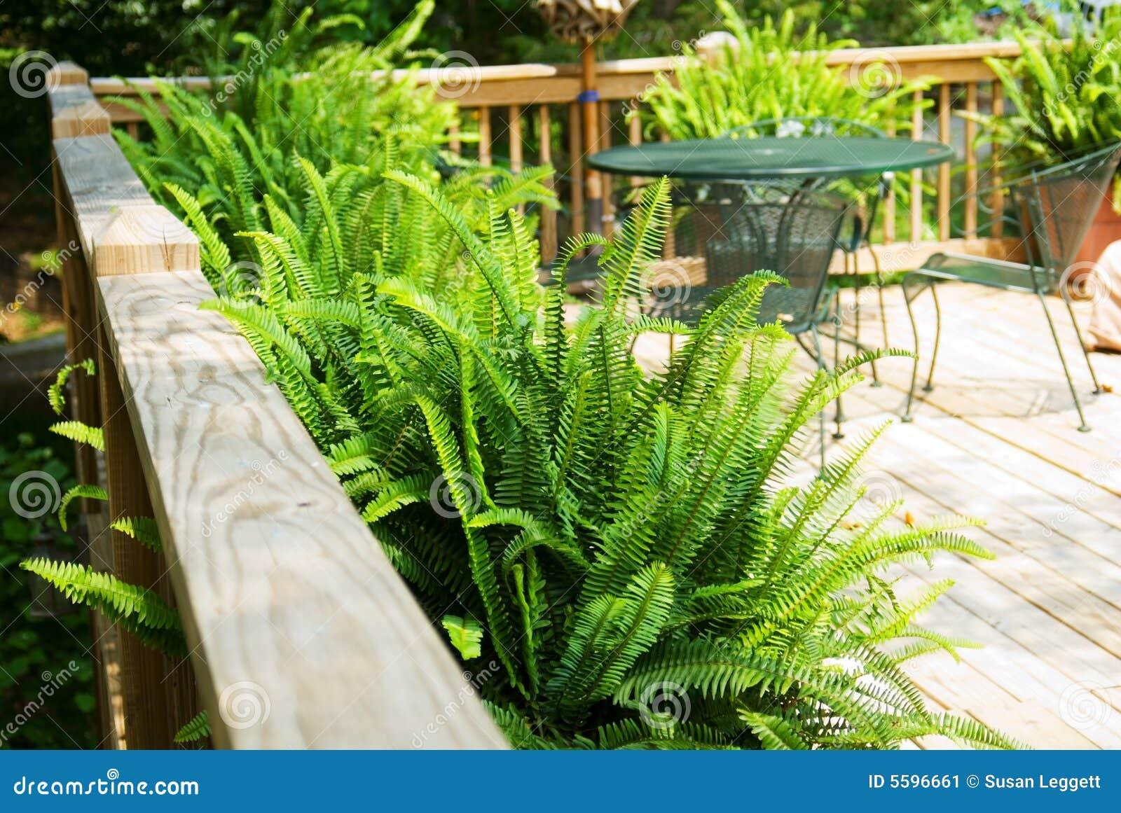 Wood Deck with Ferns