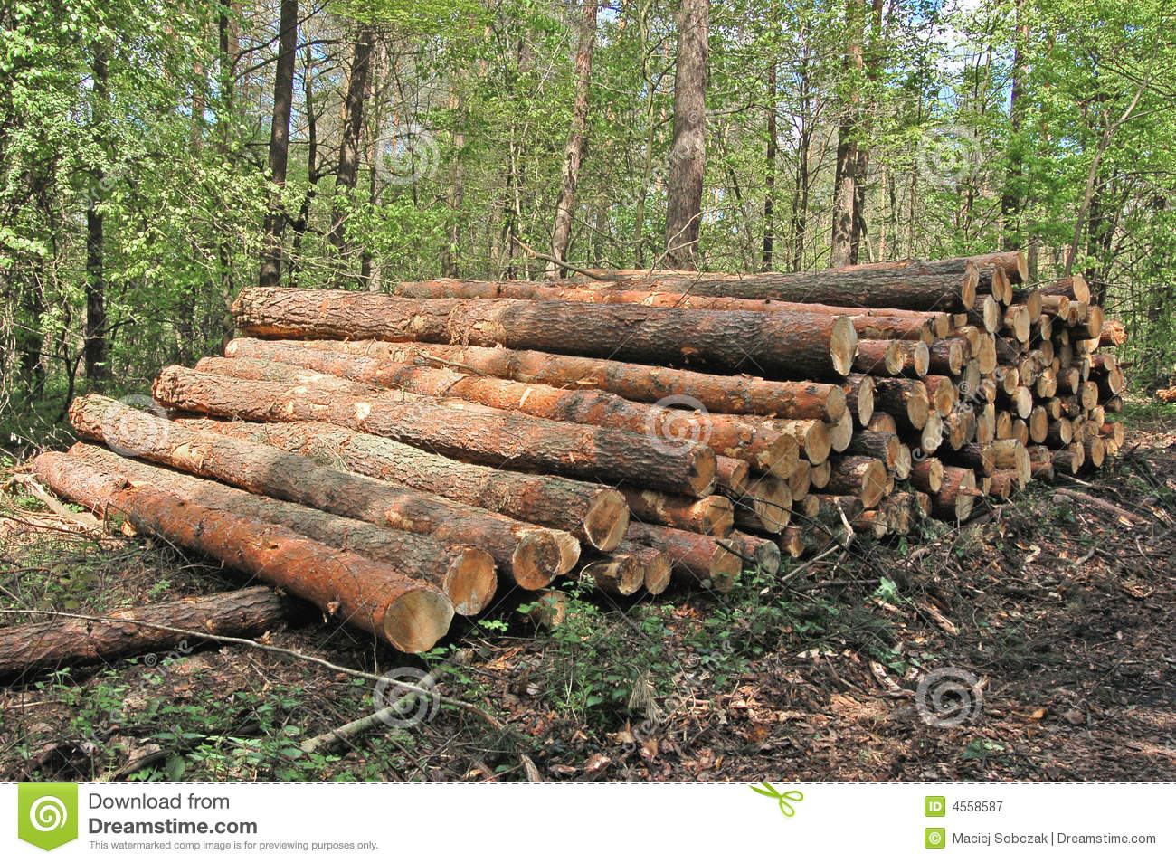 Wood In Forest Stock Image Image Of Carpentry Close