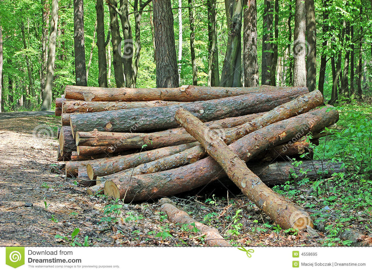 Wood in forest stock image. Image of logging, bark ...