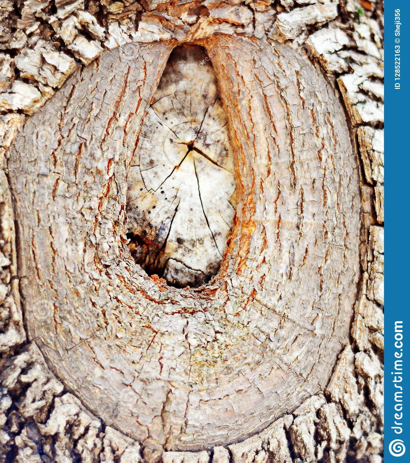 A Wood Grain On The Big Tree, Very Artistic Stock Image