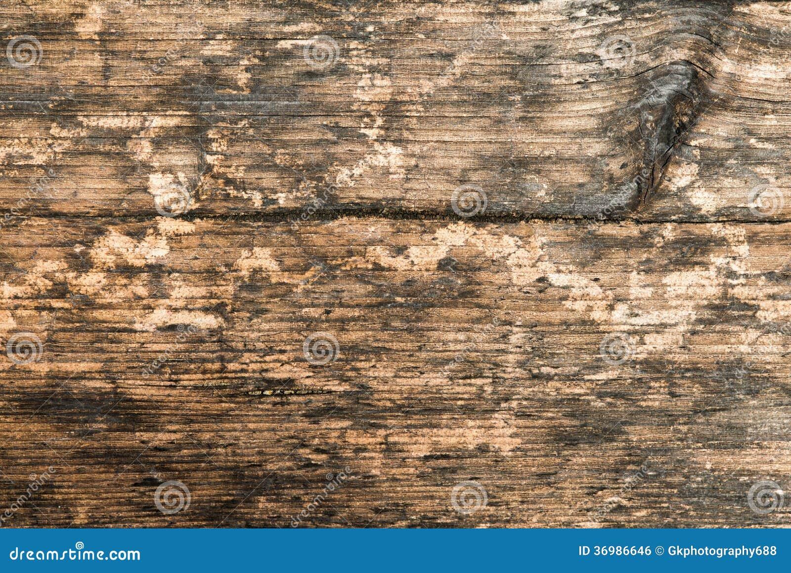 grain close up wallpaper - photo #31