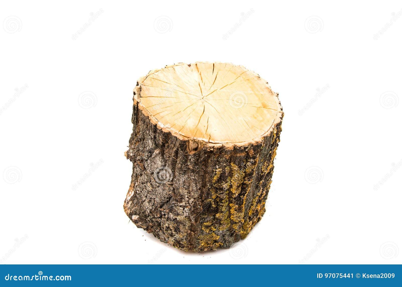 Wood log isolated