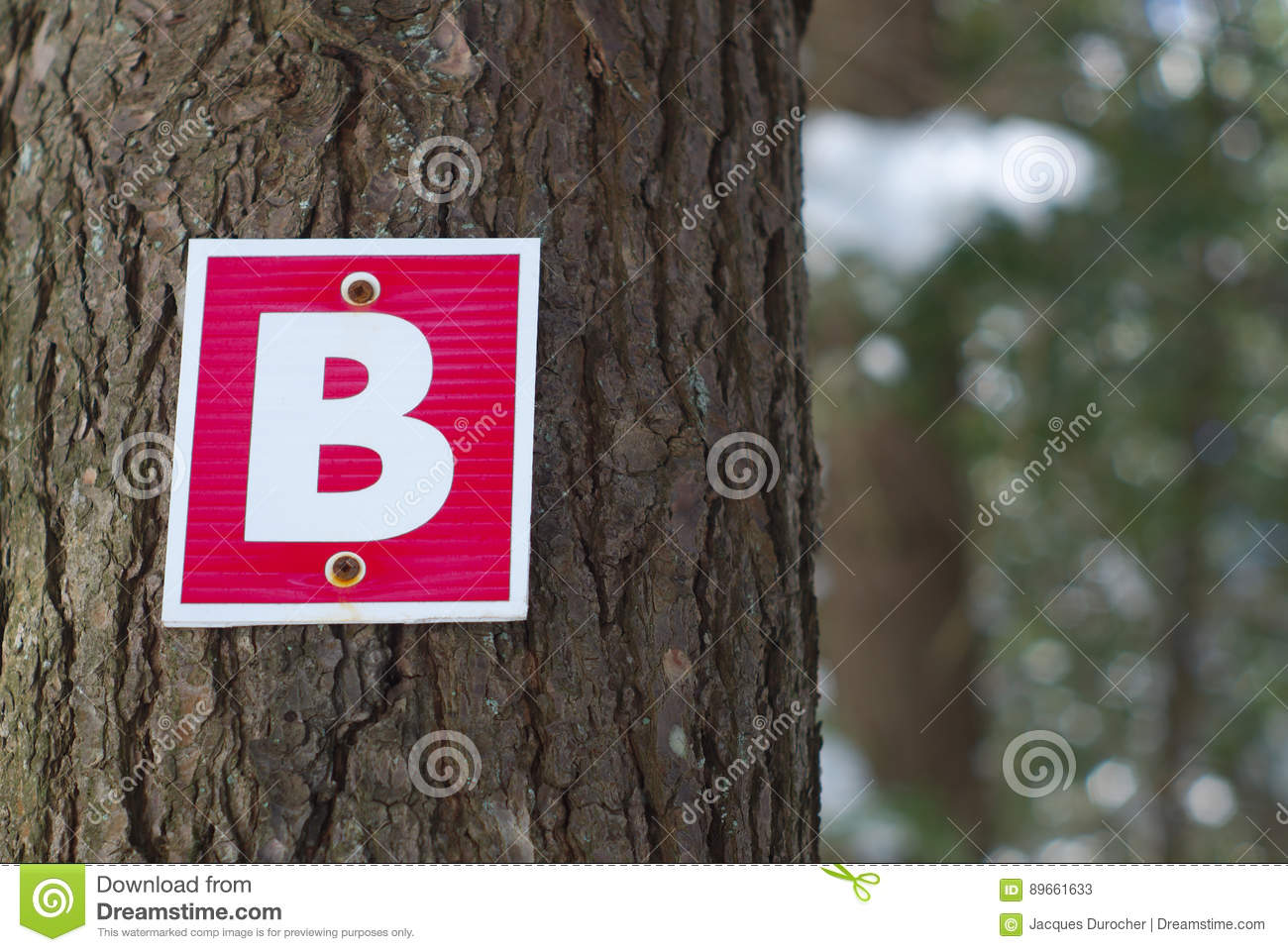 Download Wood Path Sign Letter B Forest Graphic Typography Stock Image - Image of type, symbol: 89661633