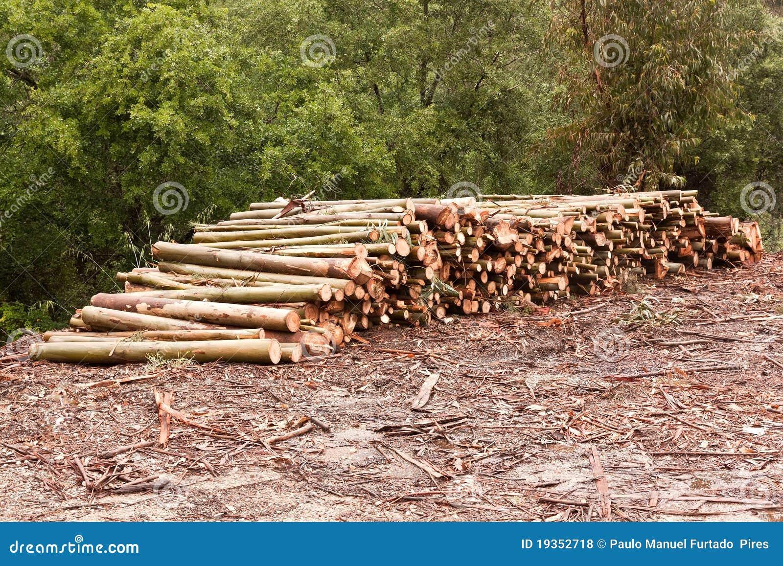 Wood Pile Royalty Free Stock Photos Image 19352718