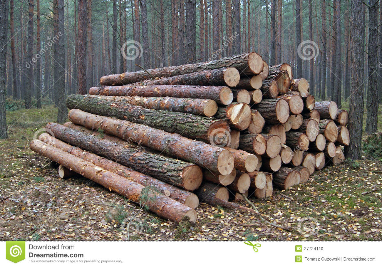 Wood piles stock photo image of forestry forest stack