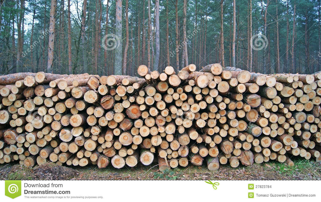 Pile Of Timber : Wood piles stock photo image of stack pile timber