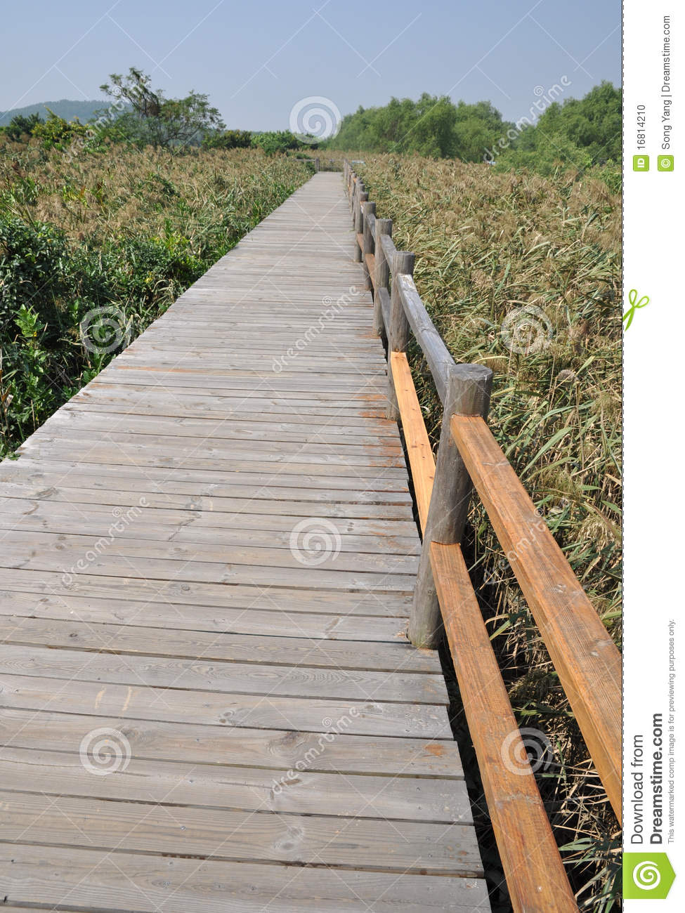 Wood plank road stock photo image