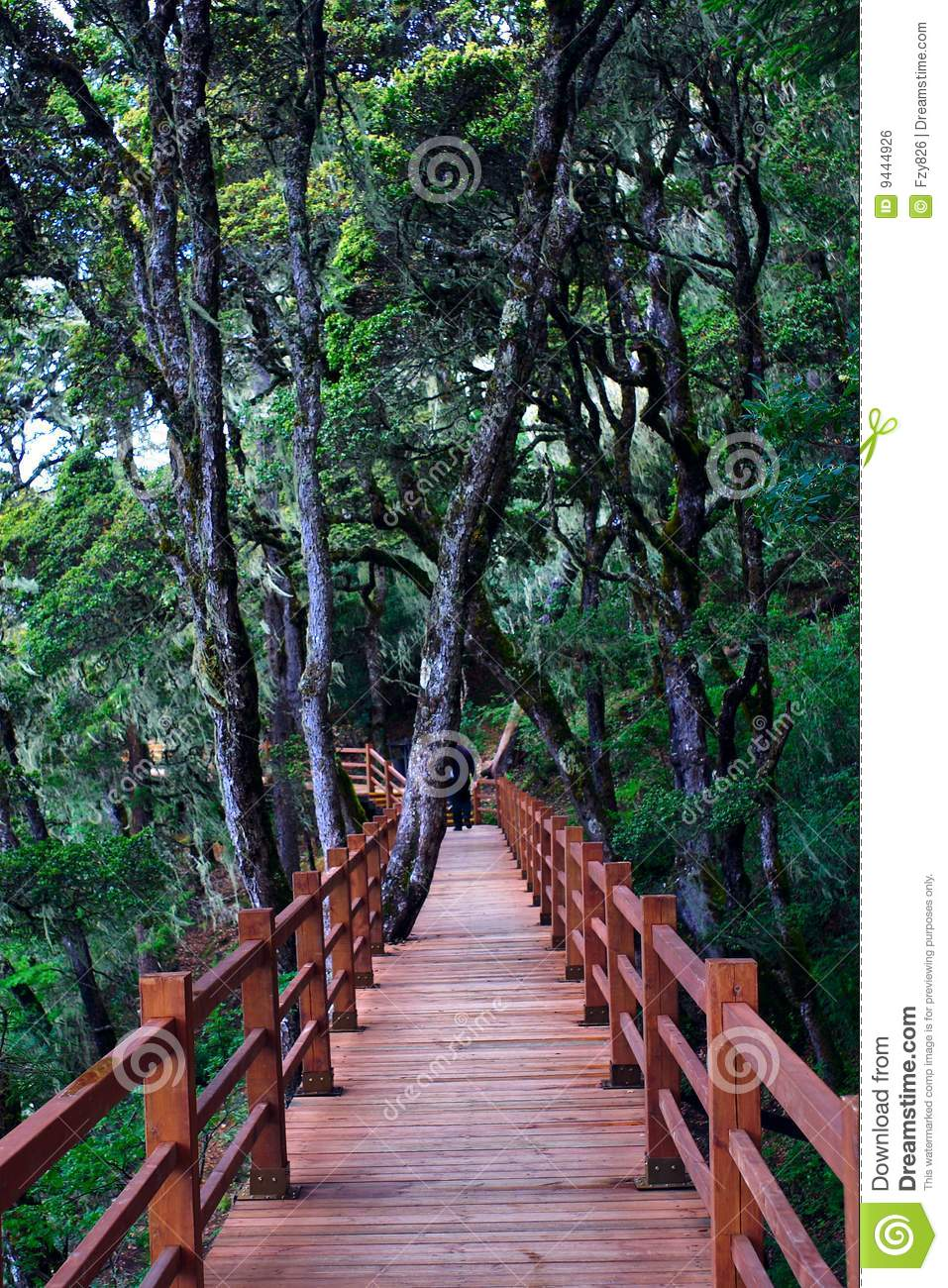 Wood plank road through the forest stock photo image