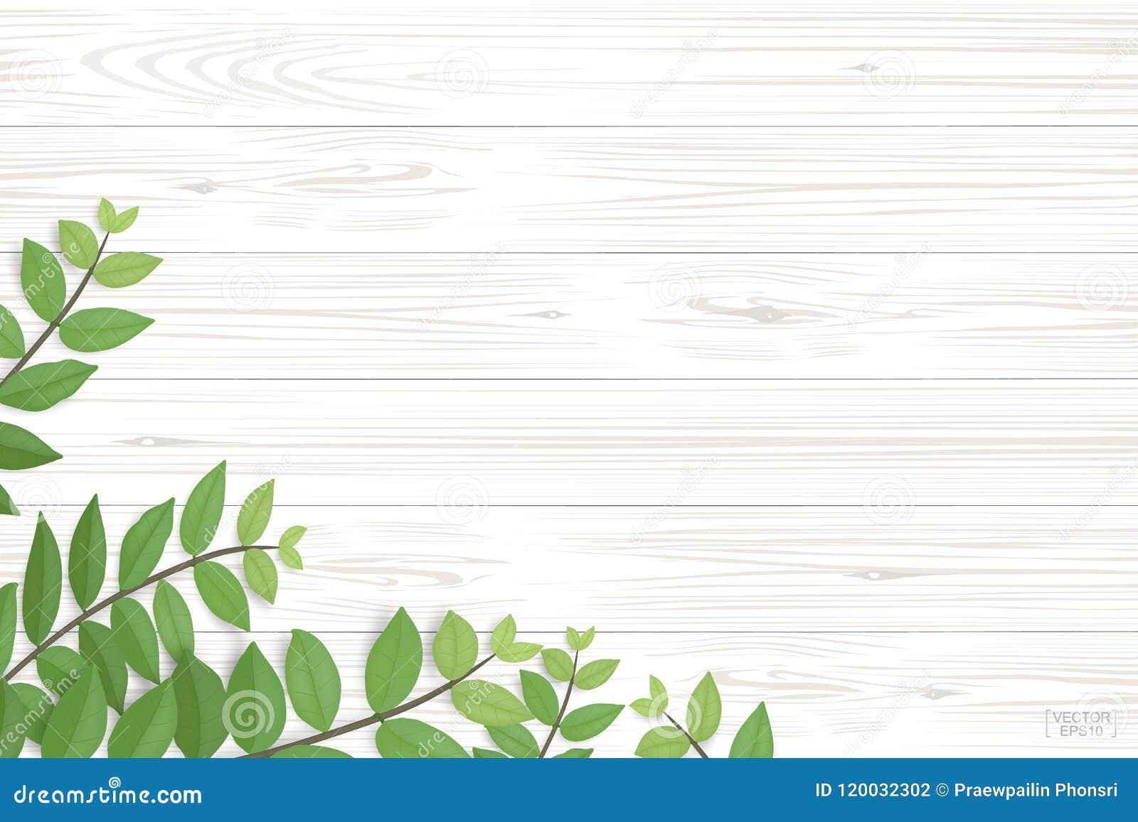 Wood plankamodell och textur med gräsplansidor för naturlig bakgrund