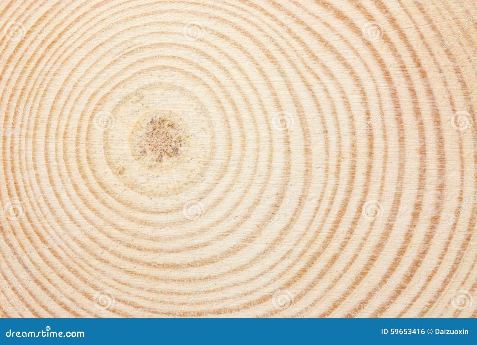 Wood Ring Stock Photo Image 59653416