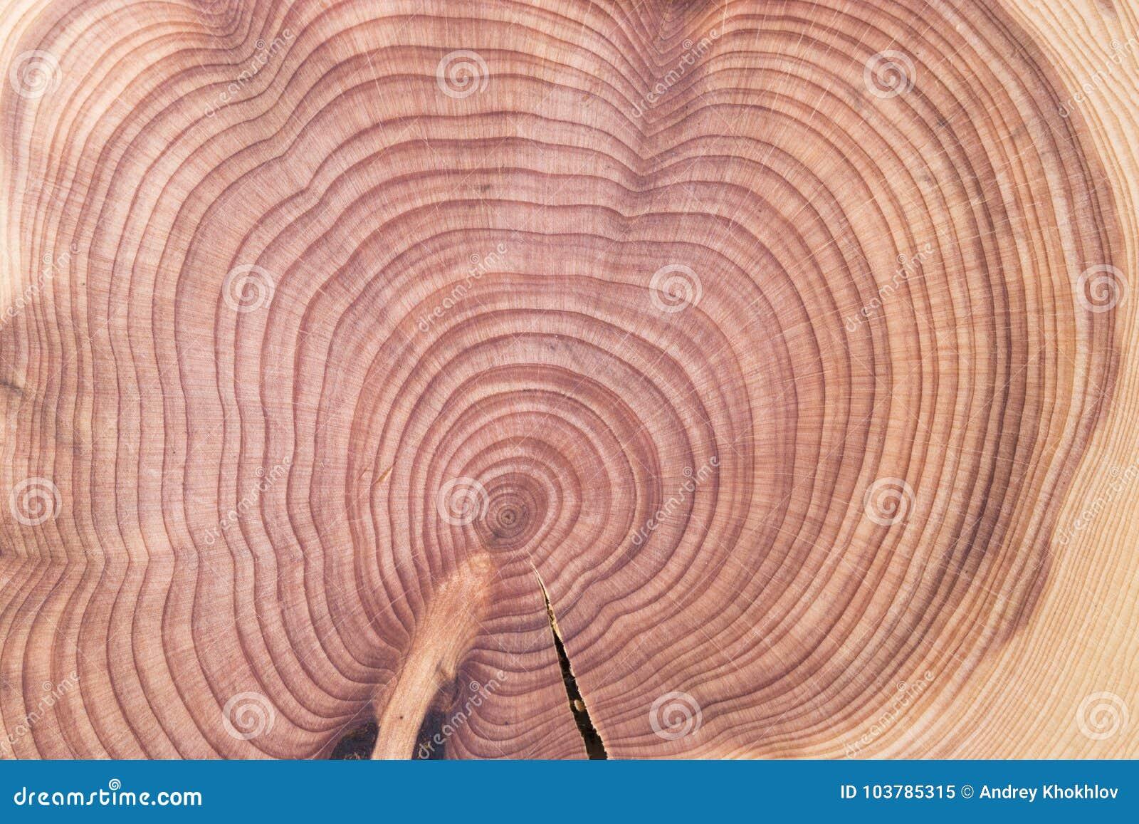 Wood Round Texture Cracked Juniper Stock Image Image Of Circle