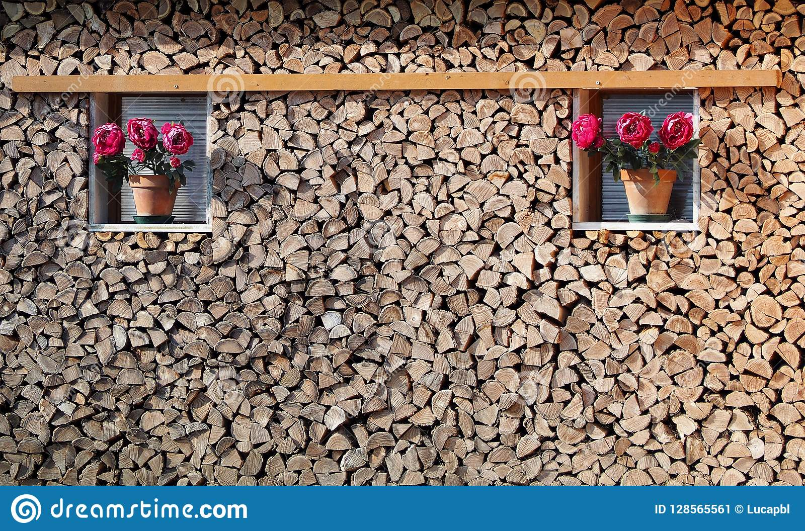 Wood stack texture with two decorative purple flower pots at its edge