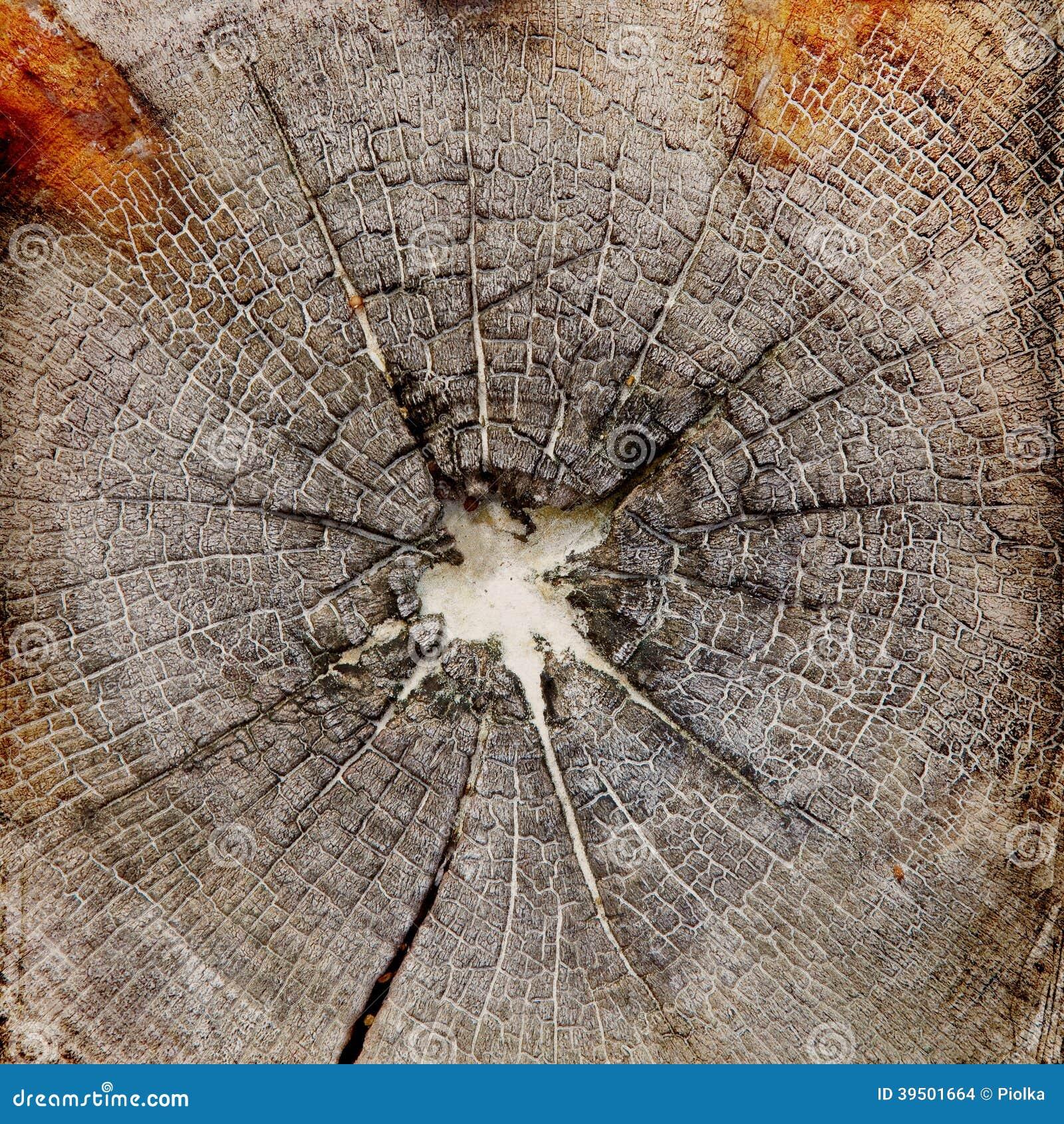 Wood structure grunge background