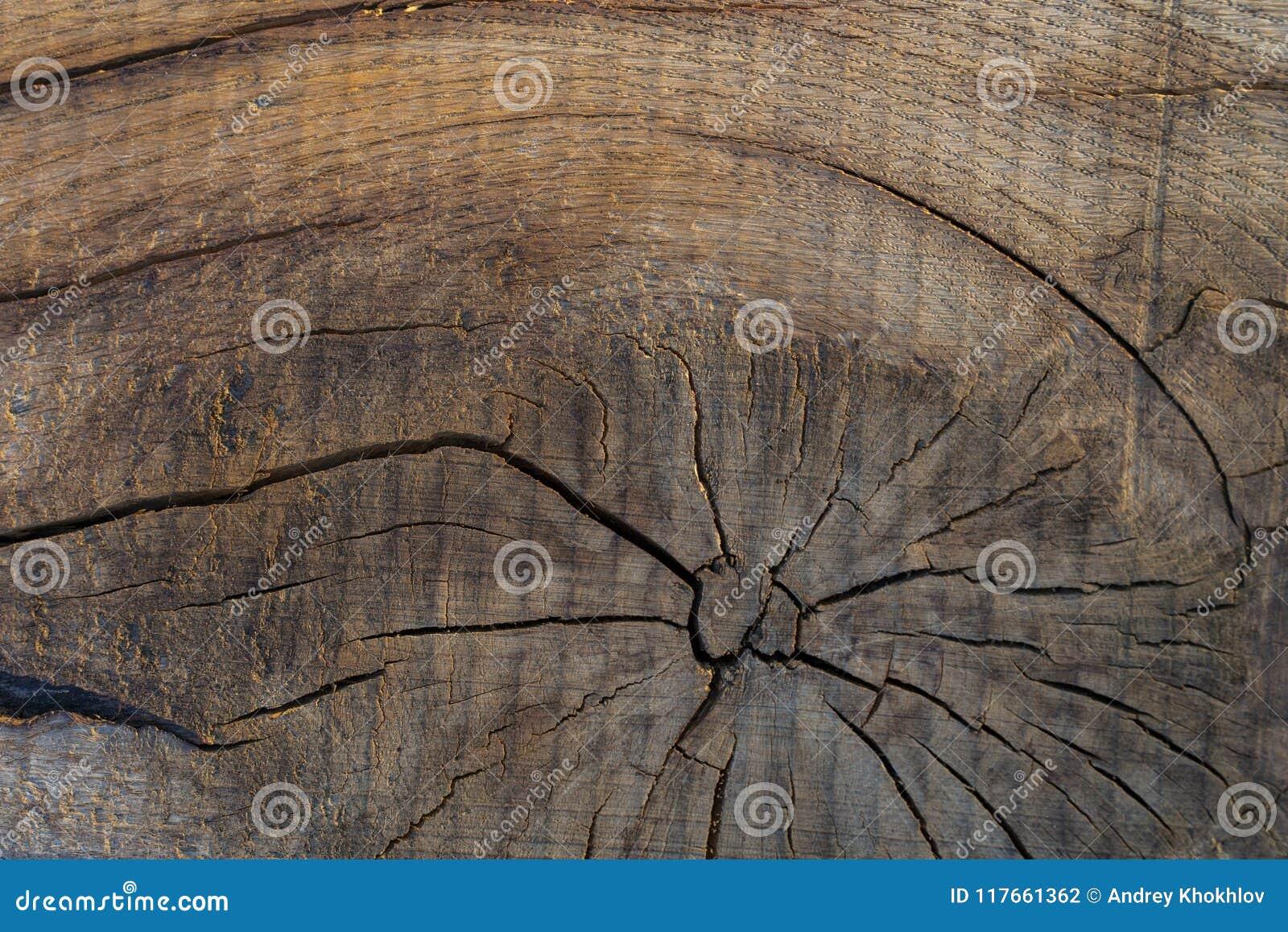 Wood textur av det verkliga trädet som ner klipps