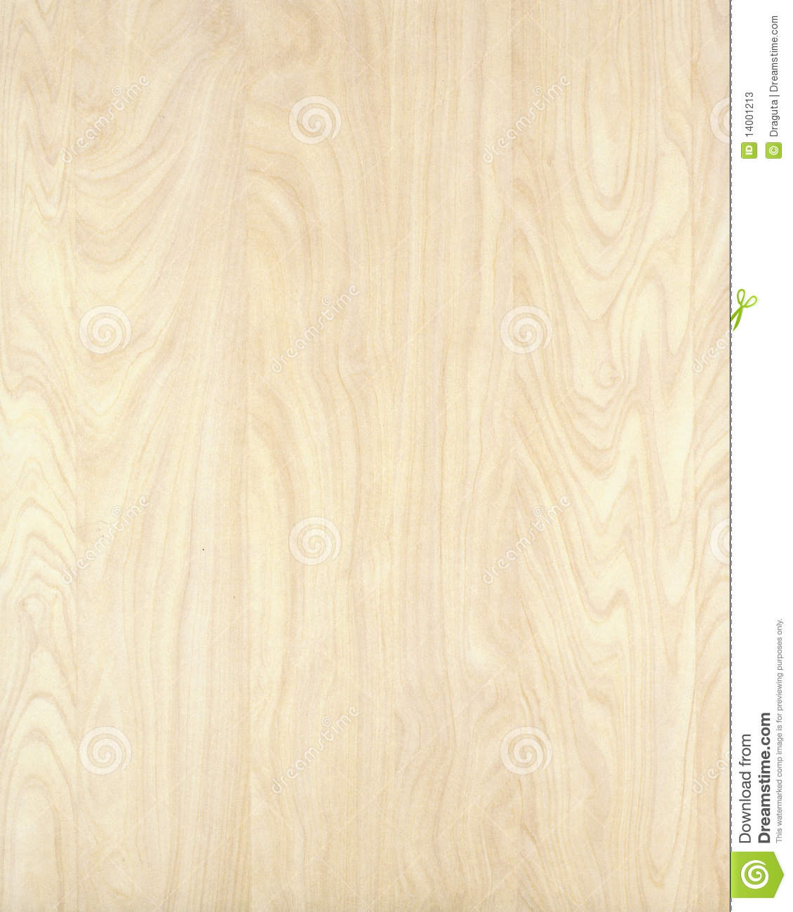 Wood texture background birch stock image of