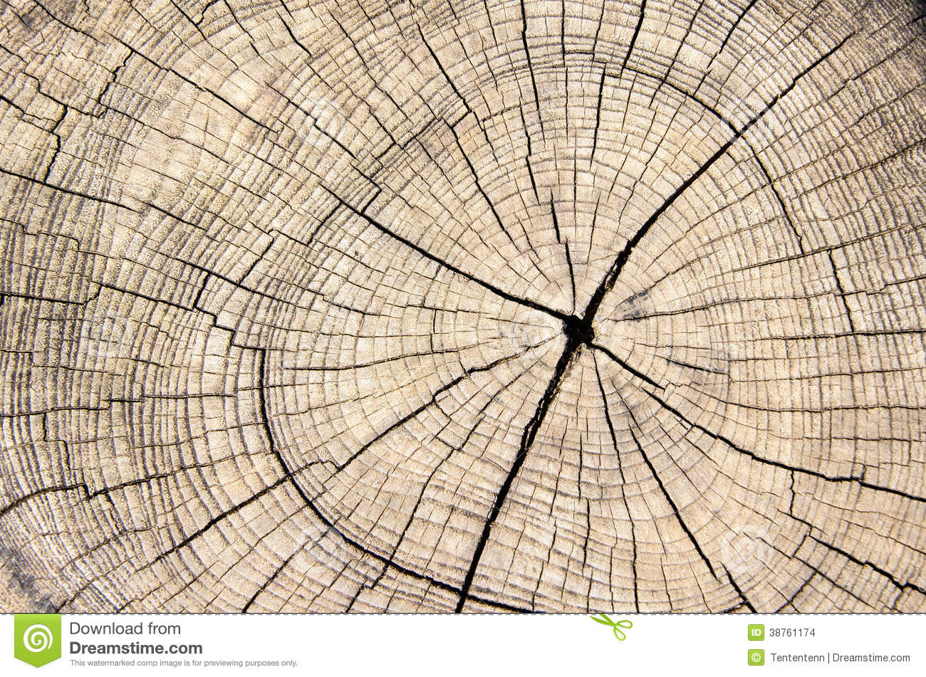 Wood Texture Cut Tree Trunk Stock Photo Image Of