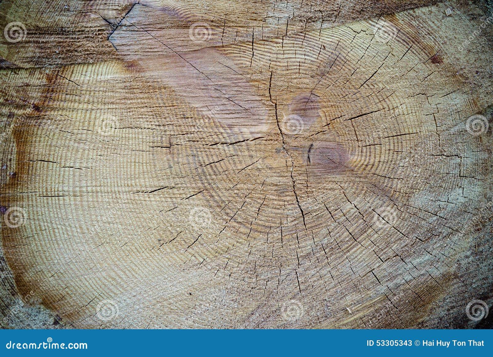 Tree Ring Natural History