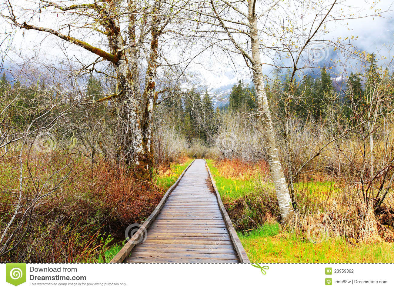 Wood Trail And Birch Trees Early Spring Landscape Stock
