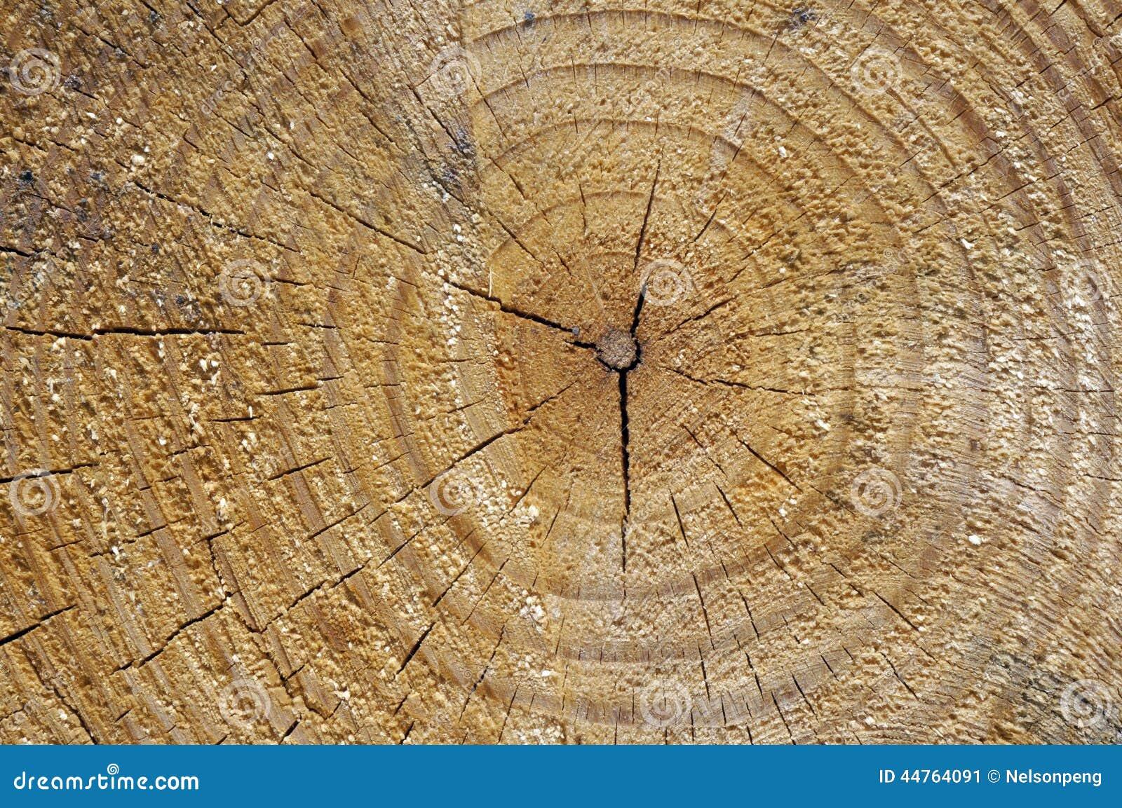 Wood tree rings