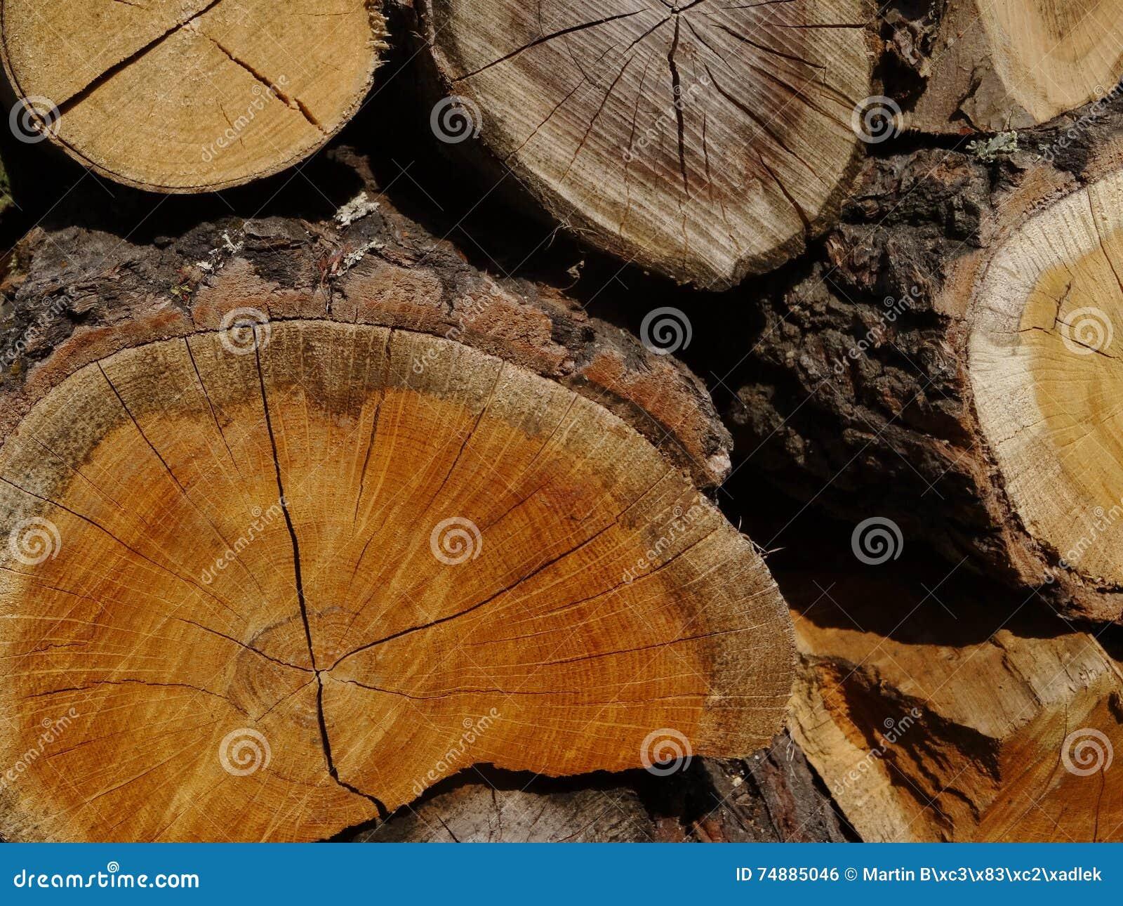 Wood. A trunk.