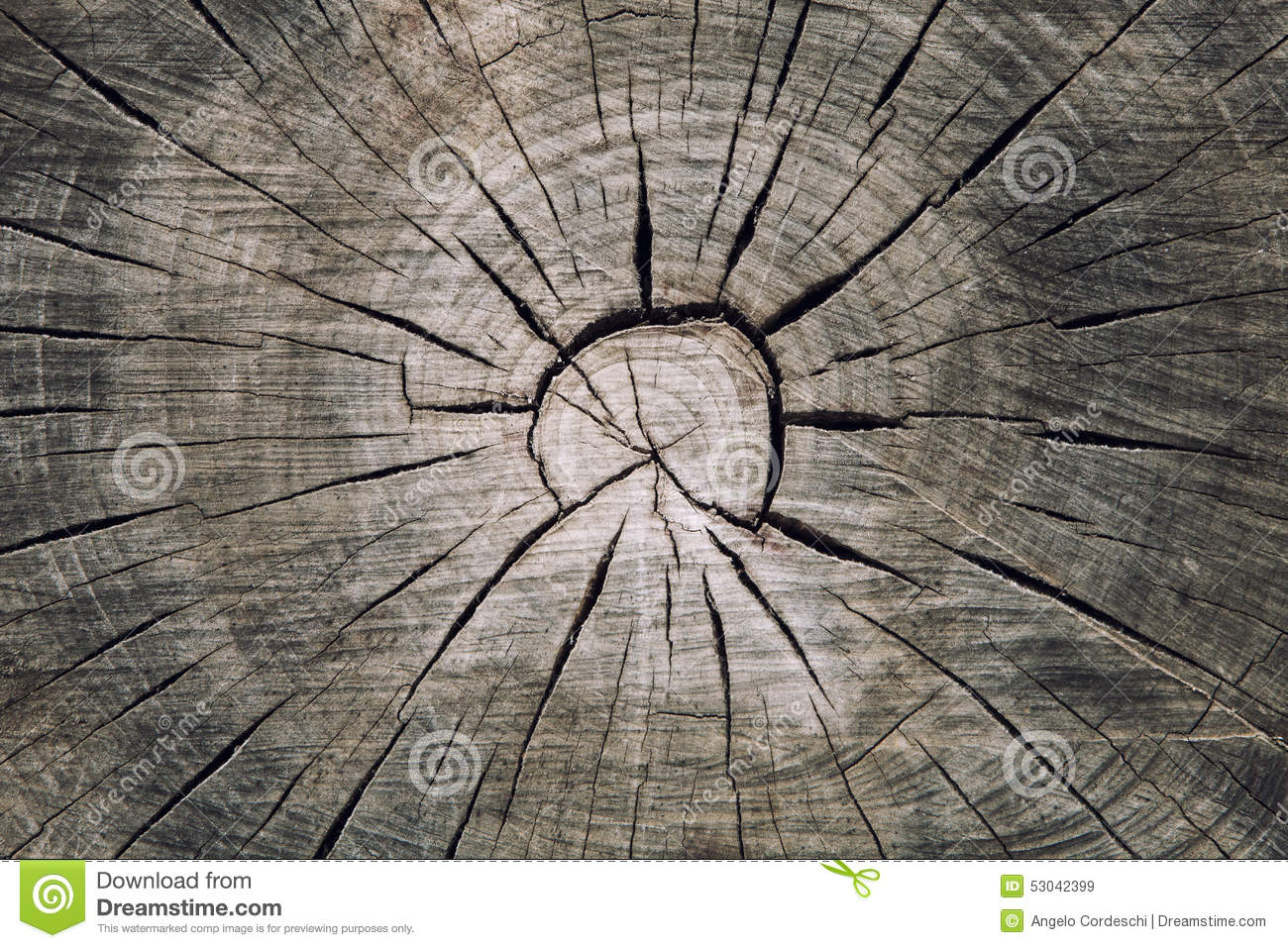 Download Wood Trunk Cross Section With Splits Wood And Rings Concentric Circles Stock Image - Image of circle, concentric: 53042399