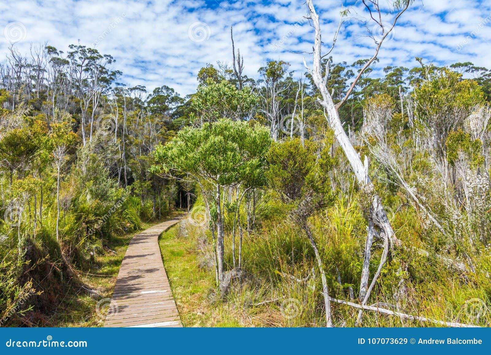 Hiking trail through Tasmanian wilderness at Hastings caves