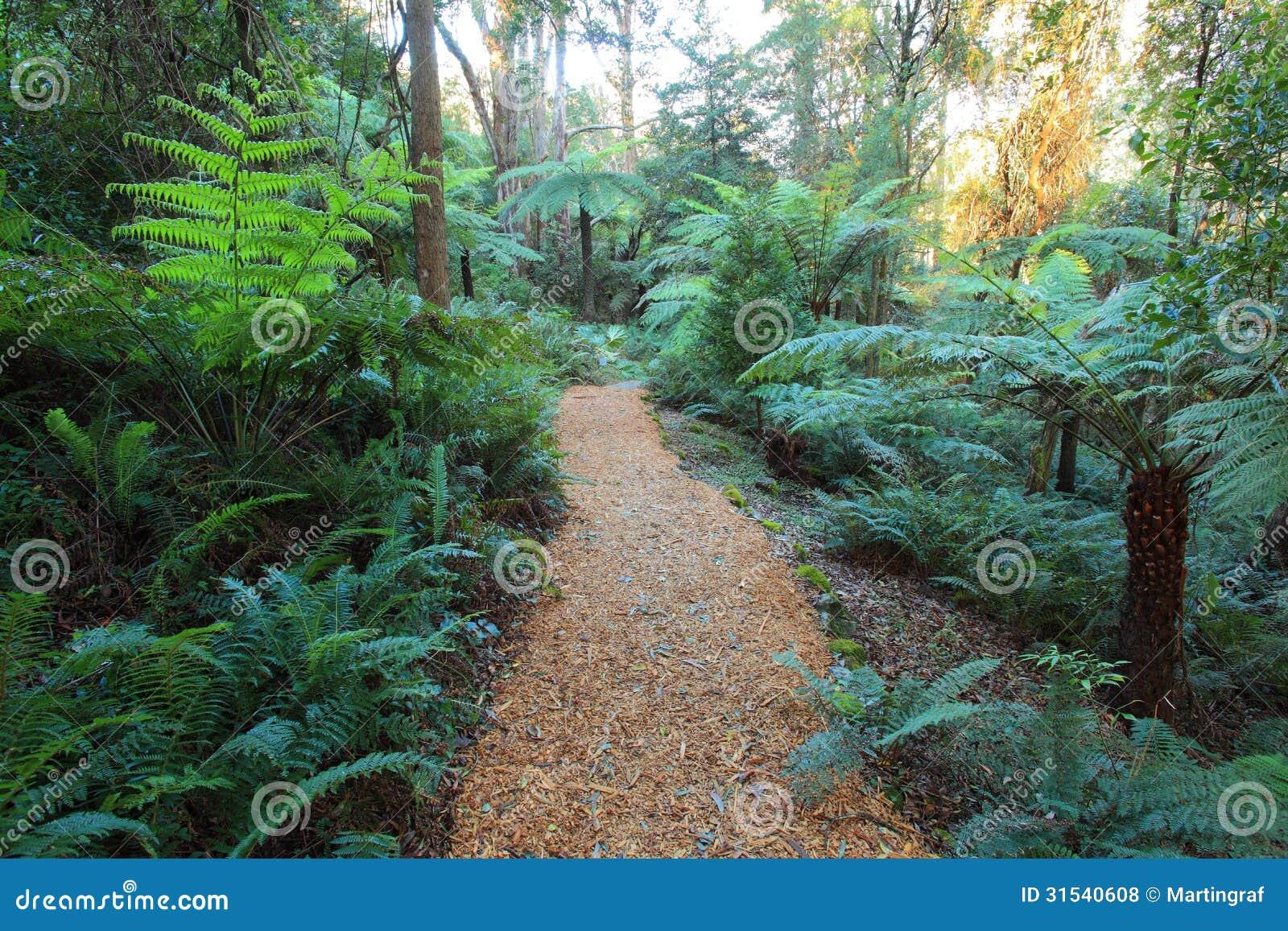 Gondwana Rainforest With Woodchip Path Royalty Free Stock