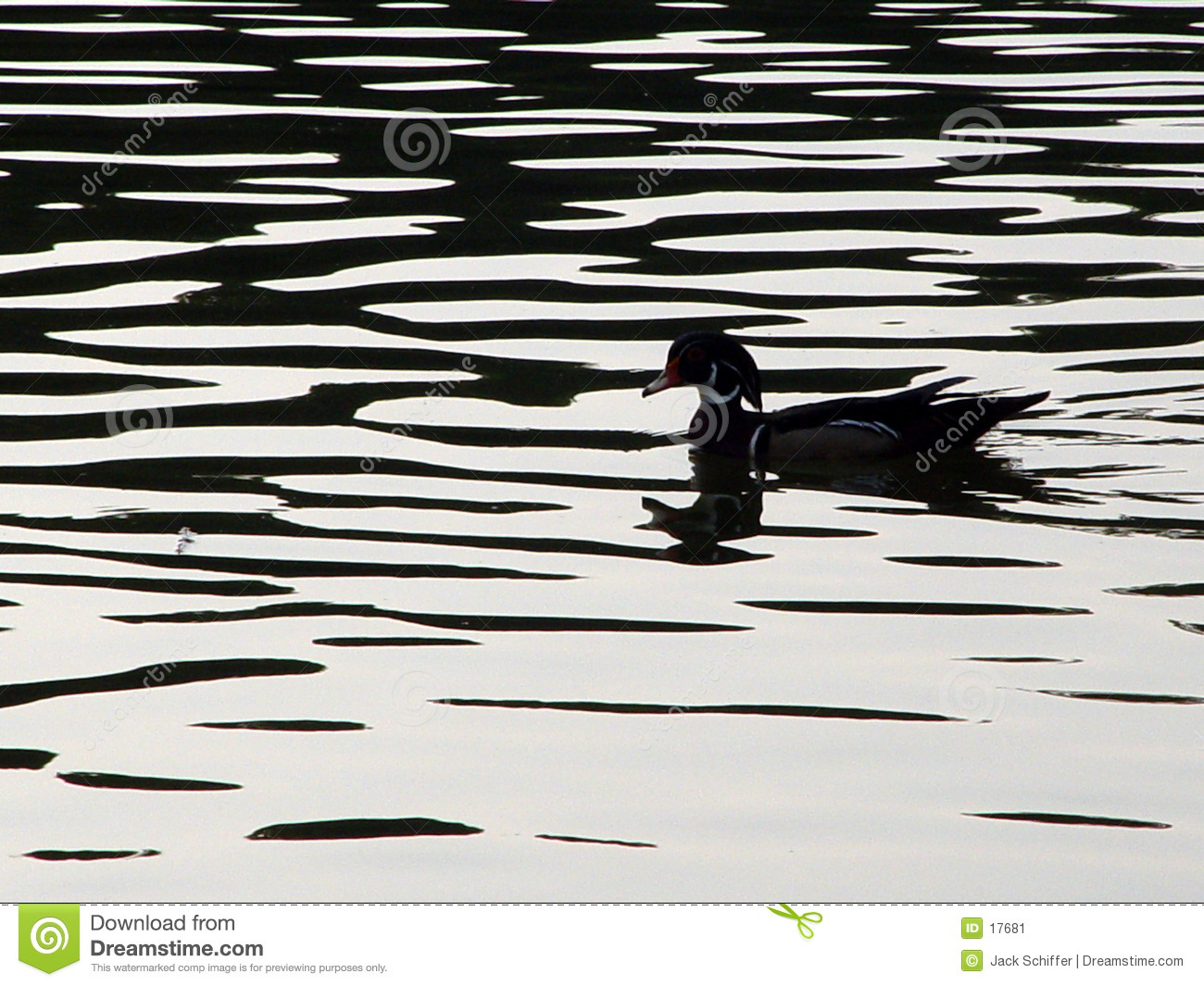 Woodduck Silhouette