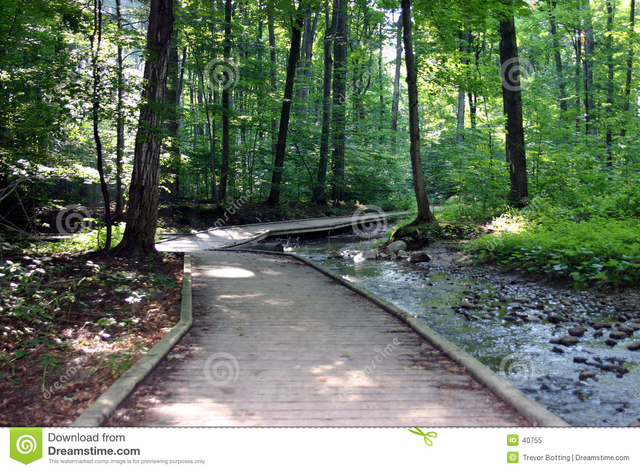 Wooded pathway through forest