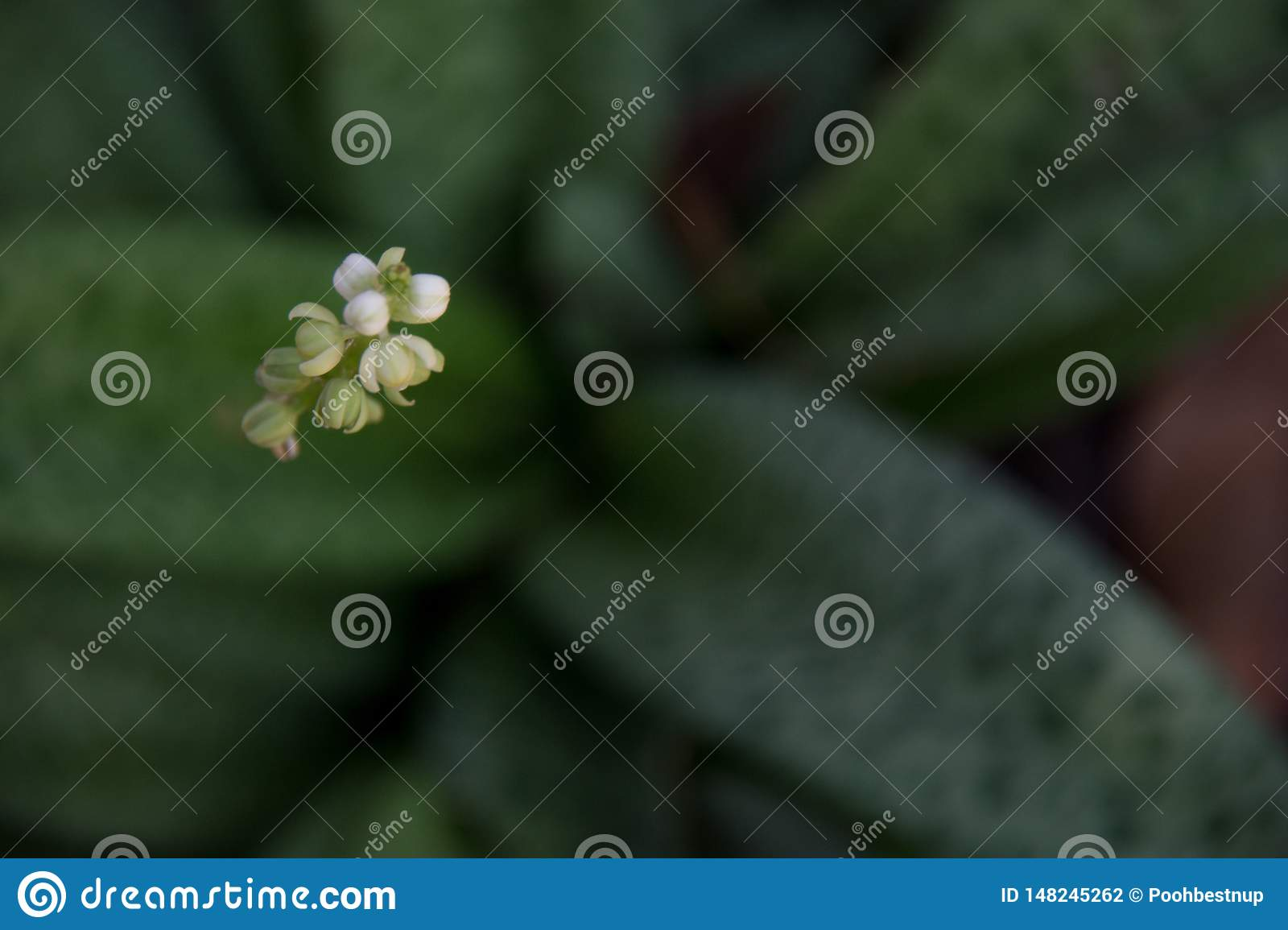Wooden background Decorated with coffee beans, frangipani flowers and leaves