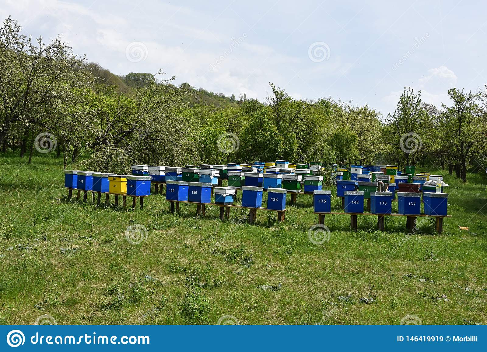 Wooden bee hives on green grass