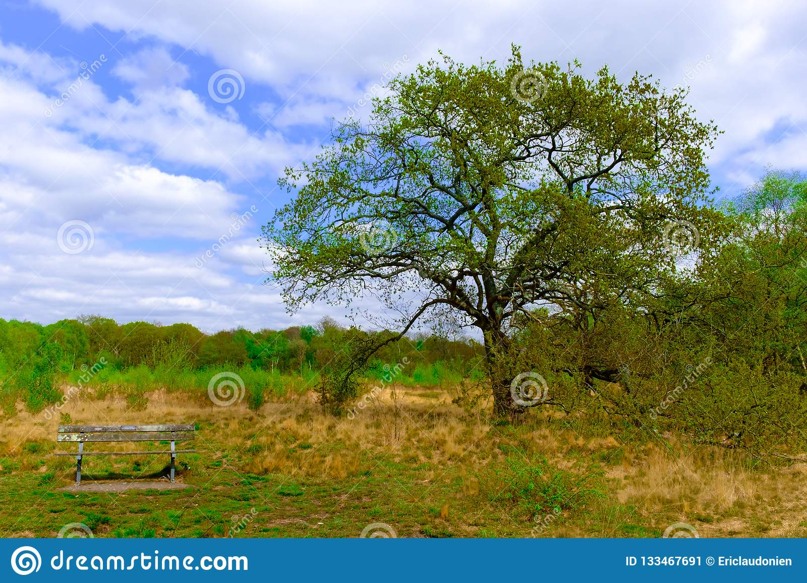Phenomenal Wimbledon Common Bench Stock Image Image Of Bench Wood Gmtry Best Dining Table And Chair Ideas Images Gmtryco
