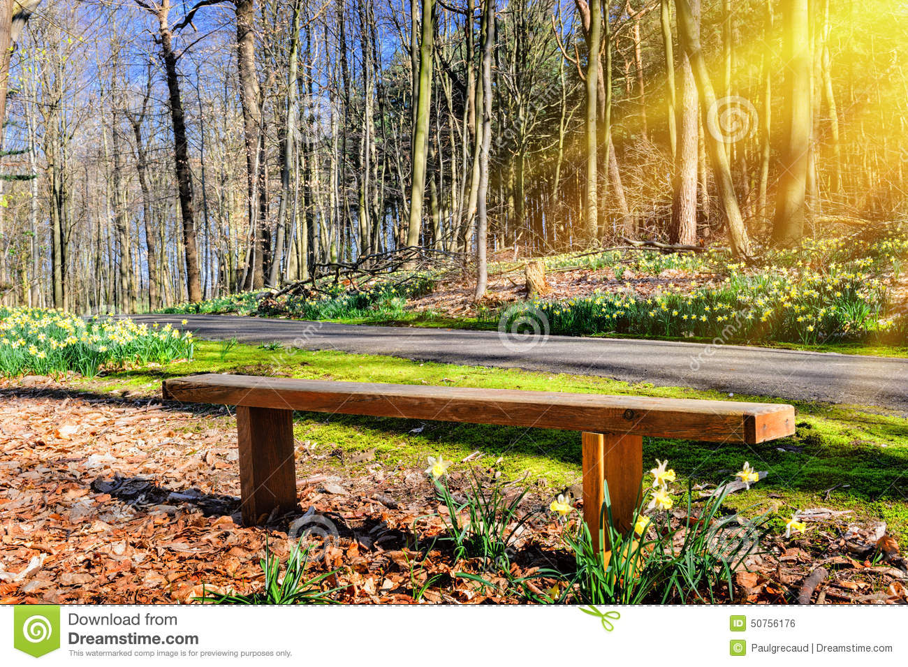 Wooden Bench In Sunny Spring Park Stock Photo