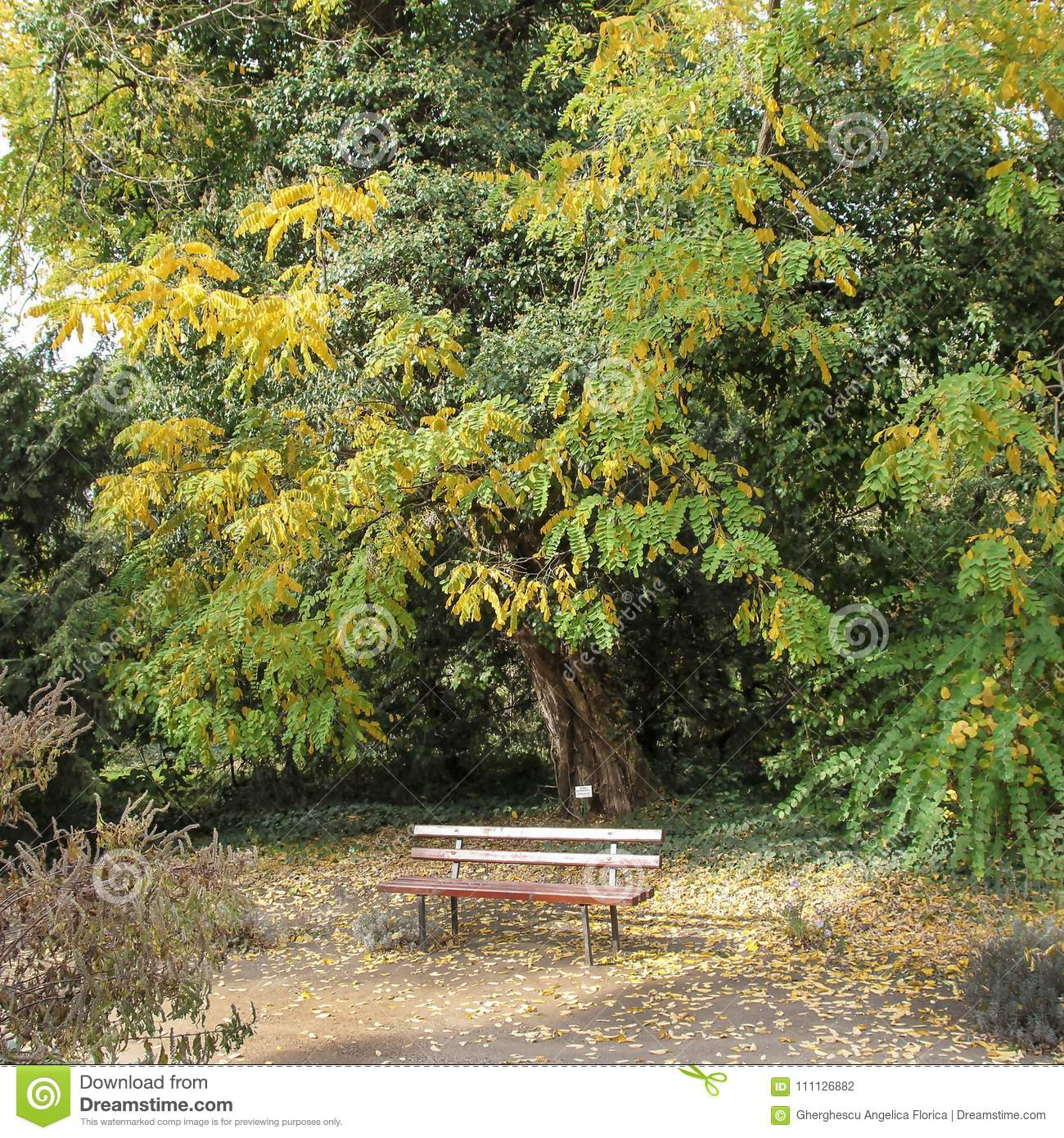 Pleasant Red Wooden Benches In The Botanical Garden Of Macea Short Links Chair Design For Home Short Linksinfo