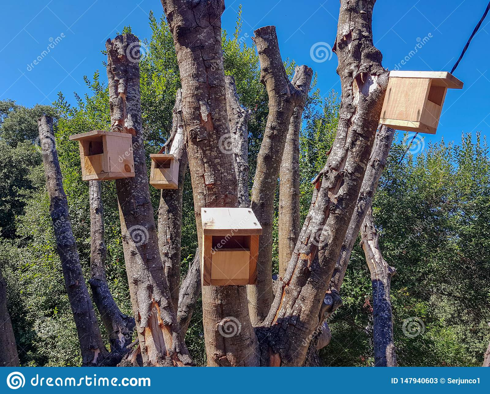 Wooden bird houses located in a newly pruned tree