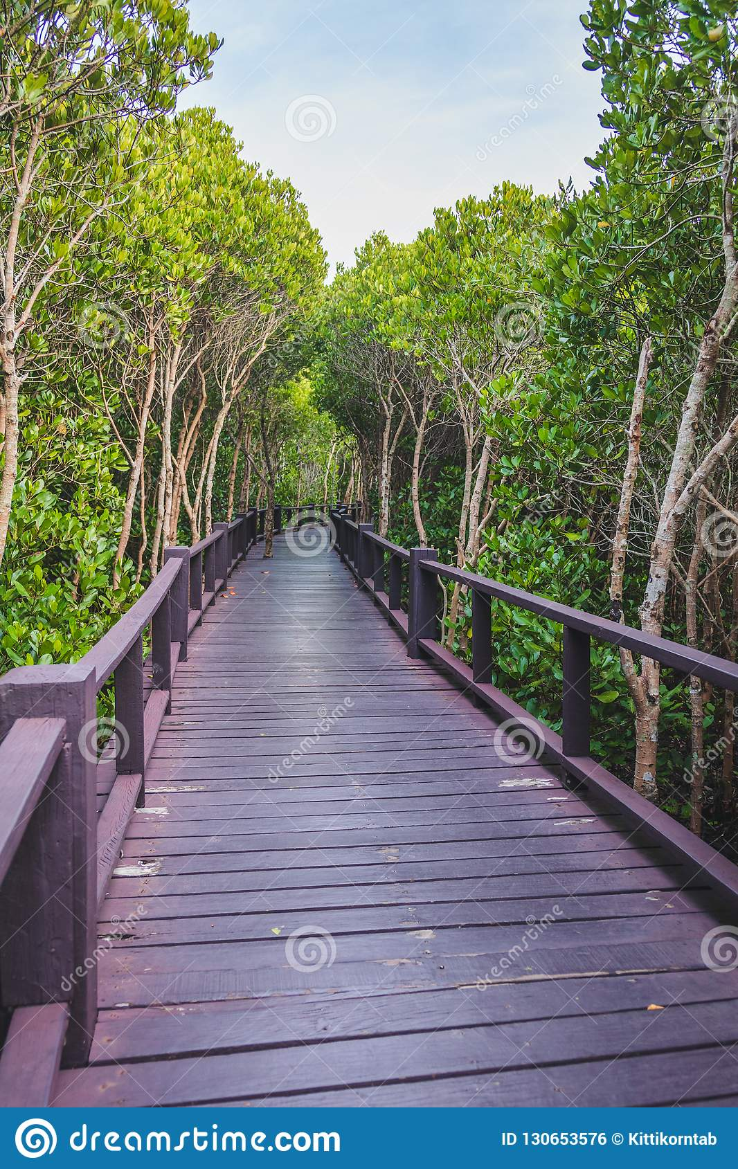 A wooden bridge in the middle of a mangrove forest with beautiful sky