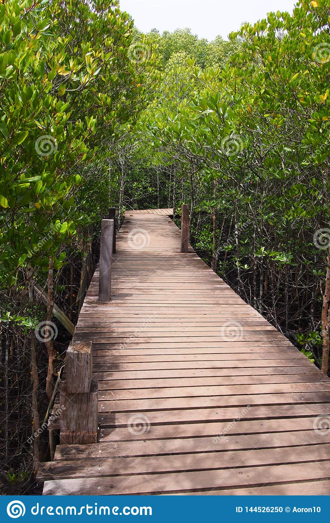 Wooden bridge for a path through the natural mangrove forest, for the natural background