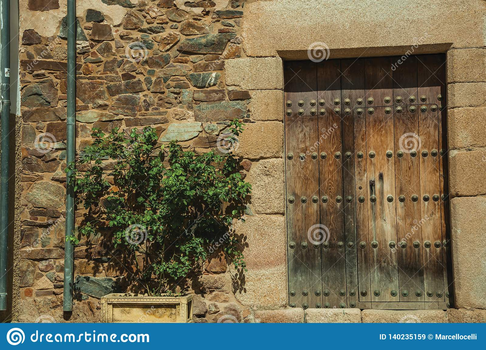 Wooden door on an old building facade with green shrub at Caceres