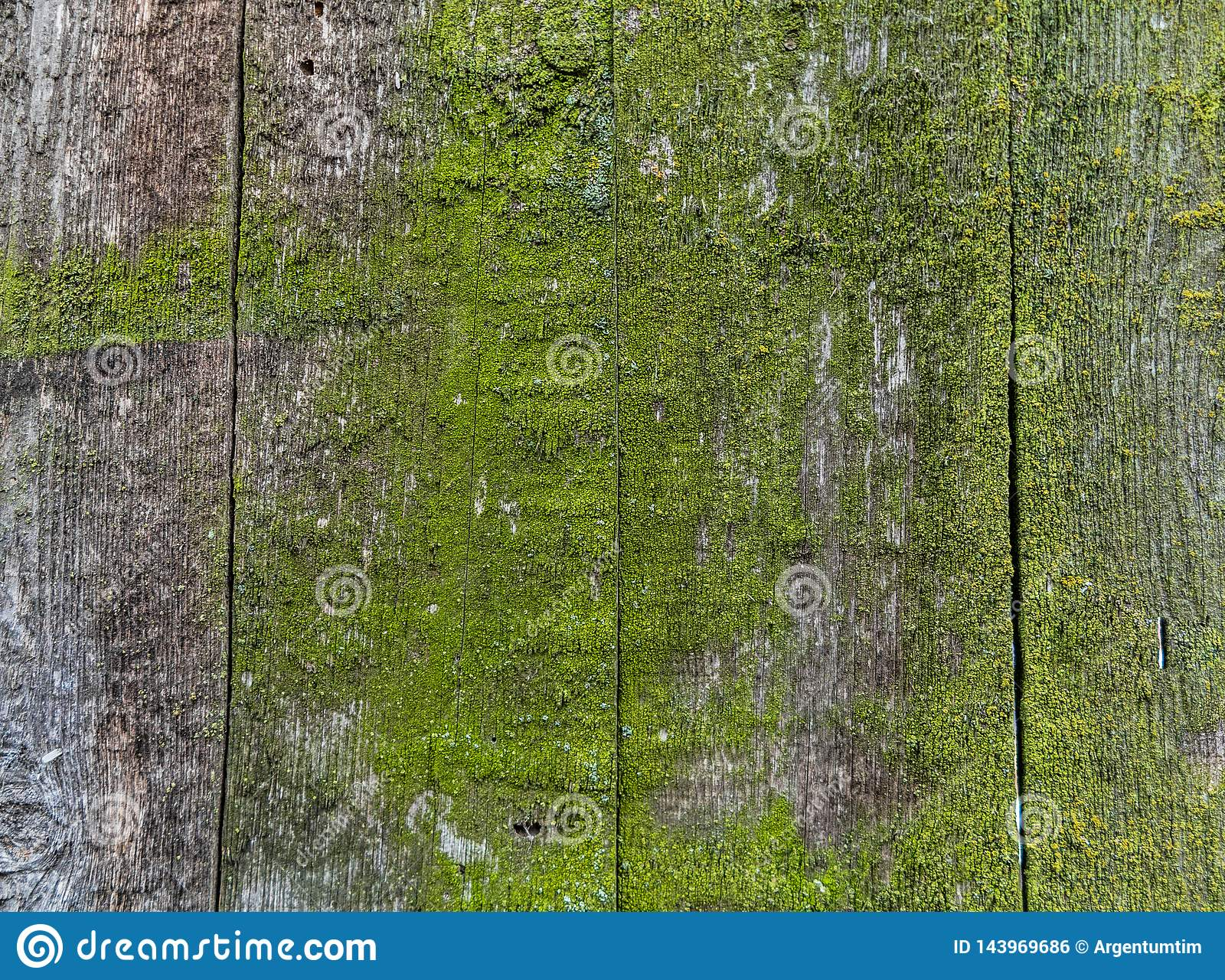 Wooden fence with green moss